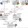 Múltiples instancias de OpenERP